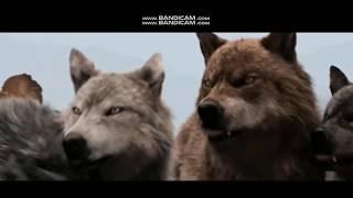 Я одинокий волк и где то продет моя стая клип про волков