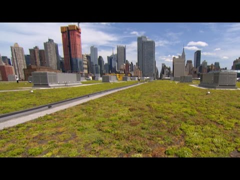 NYC Javits Center's unconventional green roof