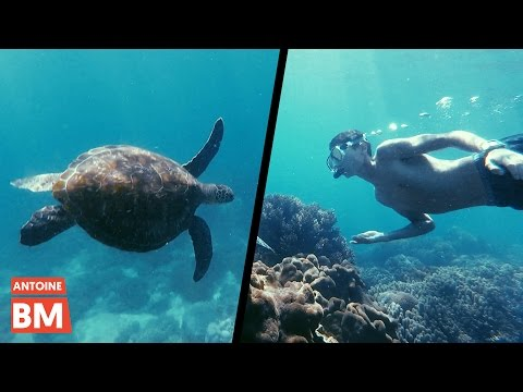 J'AI NAGÉ AVEC LES TORTUES 🐢– Apo Island, Philippines