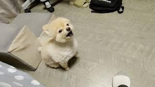 20210415 강아지, 요양보호사학원