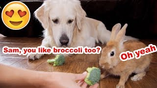 Dog and Rabbit Eat Vegetables Together [Cuteness Overload]