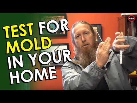 Mold Testing   How To Test For Mold In Your Home   DIY Mold Test Kit   Best Mold Test Kit to Use