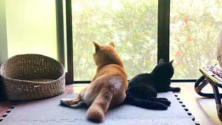 全くと言っていいほど何も起きない日の警備隊 Dog and Cat look out the window