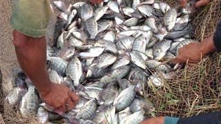 AMAZING Net Fishing in Cambodia-Traditional net fishing-Amazing Viral Videos -cast net fishing