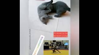 Вольная борьба в исполнении британских котят. С комментариями!