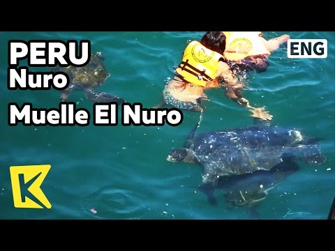 【K】Peru Travel-Nuro[페루 여행-뉴로]바다 거북이와 수영하기Muelle El Nuro/El Nuro/Turtle/Swimming