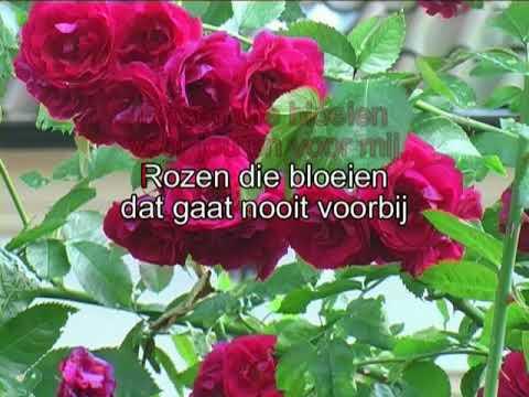 Corry & de Rekels -  Rozen die bloeien ( KARAOKE ) Lyrics