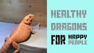 Bearded Dragon Morphs Part 1