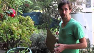 One Minute Tips: How To Kill Your Weed Seeds (with Ben Gould)