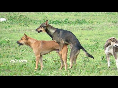 Awesome Summer Ruraldogs!! Australian Shepherd, Pembroke Welsh Corgi, Boston Terrier
