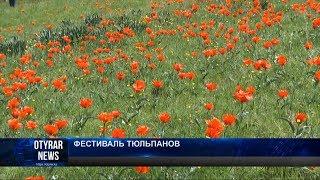 Южные степи Казахстана первыми надели наряд из тюльпанов