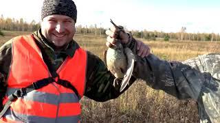 Как охотиться на вальдшнепа осенью Золото осеннего леса
