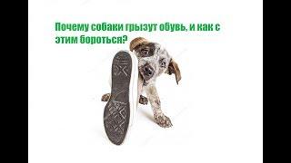Собака Грызет Обувь & Зачем Собака Грызет Обувь. Ветклиника Био-Вет