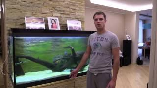 видео Аквариум для квартиры