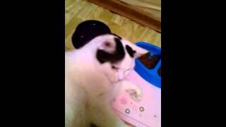 Кот ест лёжа))