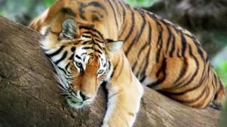10 самых БОЛЬШИХ кошек в МИРЕ
