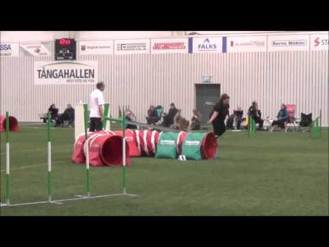 Yippie agility