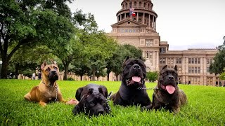 Trying to help a friend while exploring the state capital with my dogs!