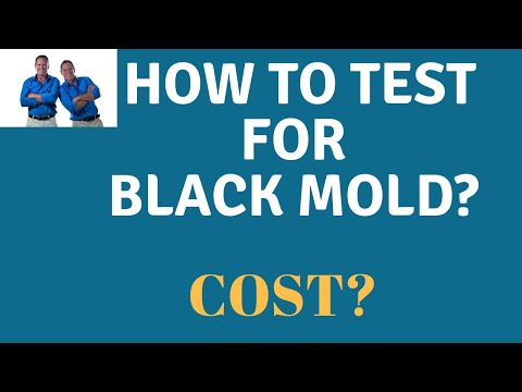 Mold Air Testing: What Does It Cost? What Are The Steps To Testing For Mold In Your Home?