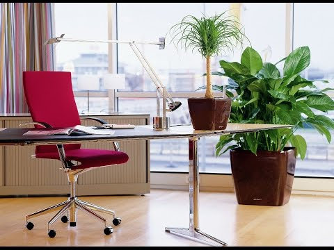 Лучшие КРУПНЫЕ комнатные растения. Как выбрать, куда поставить