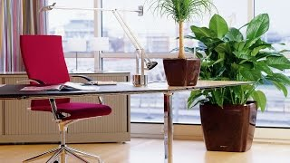 Лучшие КРУПНЫЕ комнатные растения ❖❖❖ Как выбрать, куда поставить(, 2016-09-16T08:03:00.000Z)