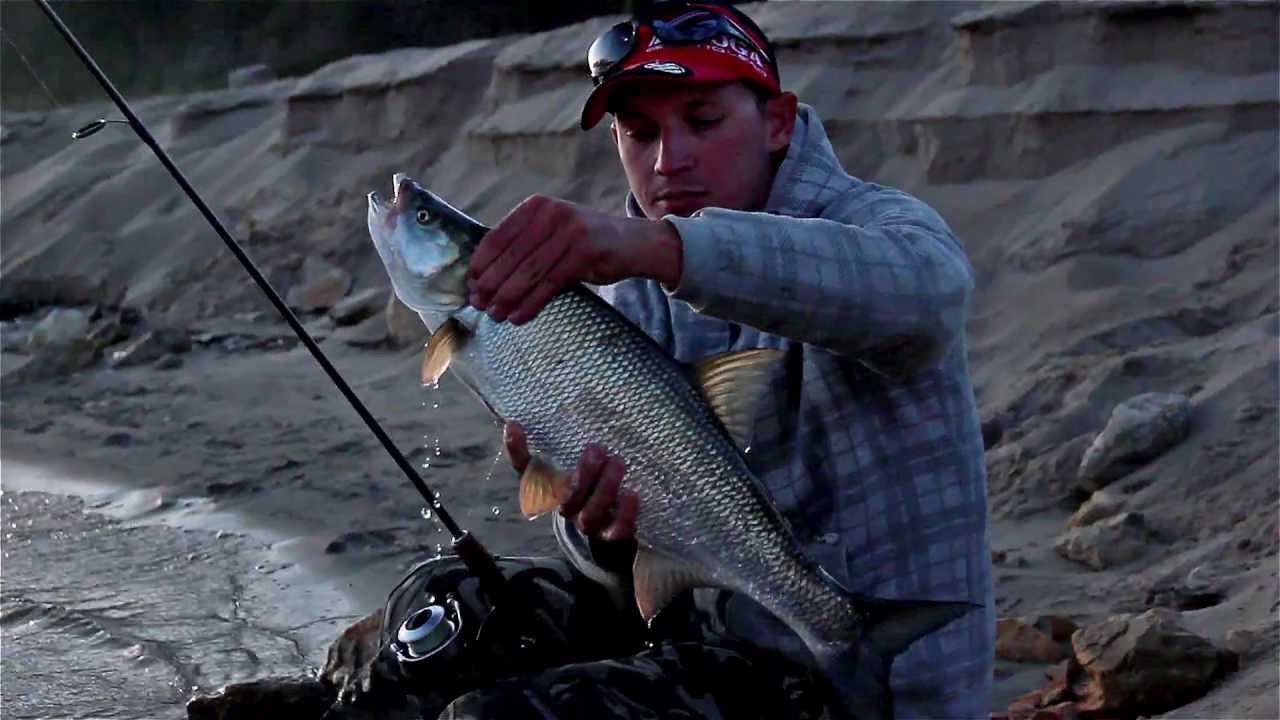 Top water asp fishing youtube for Top water fishing