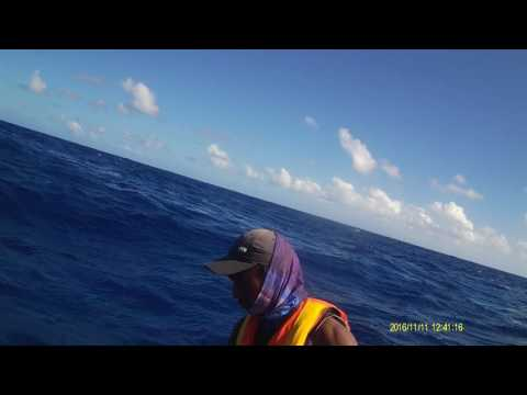 Best Offshore Fishing For Yellowfin Tuna In Dominica