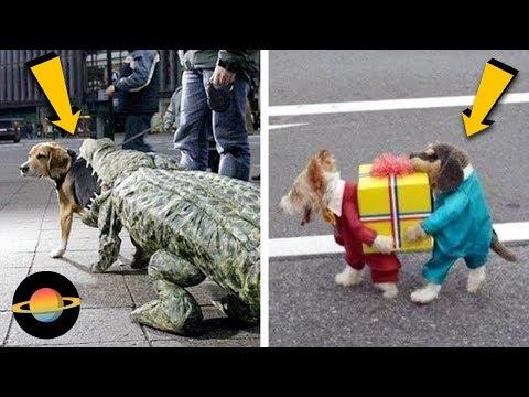 10 najśmieszniejszych przebrań dla psów na Halloween