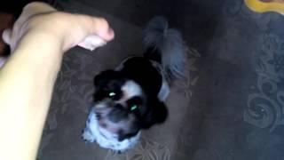 Рассказ про мою собаку