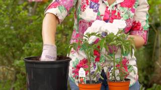 How to Plant Tomatoes With Egg Shells : Garden Space