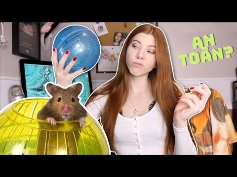 《có PHỤ ĐỀ》⛔ ngừng dùng BANH CHẠY📣 hamster ngay hôm nay! BỊ CẤM vì gây chấn thương, stress?