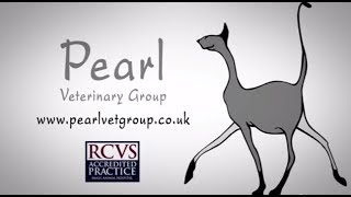 Pearl Veterinary Group    Make The Most Important Decision For The Furriest Member Of Your Family
