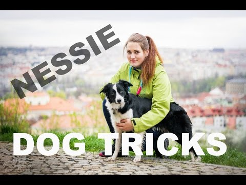 Nessie the BOC | Dogdancing & Dogfrisbee tricks