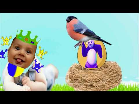 Learn colors from bird eggs in the net||Bingo Funny Rhymes TV