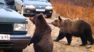 Three Bears (Медведи попрашайки) full