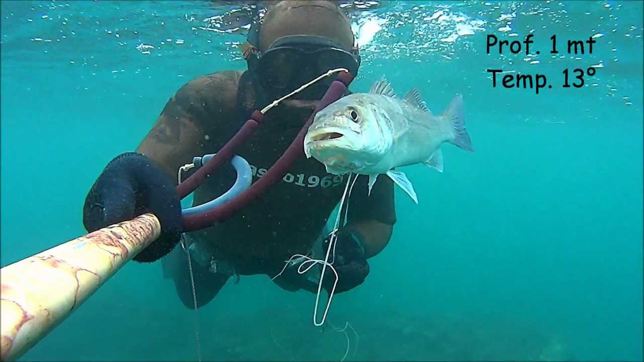 Action Camera Subacquea : Pesca sub spigola drawing dead actioncam sony as youtube