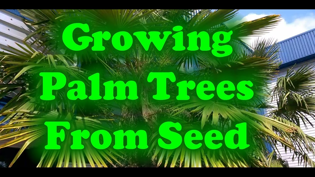 How To Grow Palm Trees From Seed