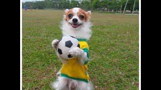Собака футболист. Супер скилл. Смешные животные
