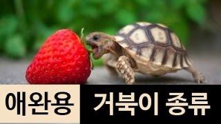 (랭킹박스) 애완용 거북이 종류