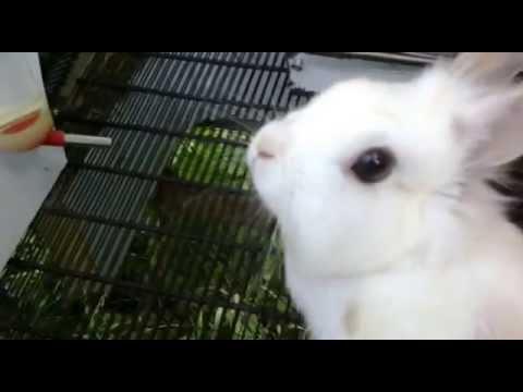 Кролики в клетке из холодильника