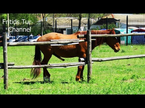 Horse Erection - Funny Videos