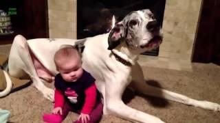 lustige videos zum totlachen   Die Tiere und die Kinder