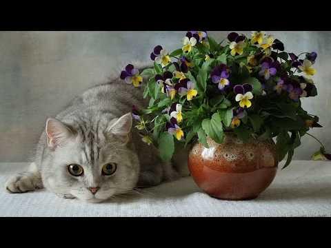 Вопрос: Как отвадить котенка гадить в цветочный горшок?