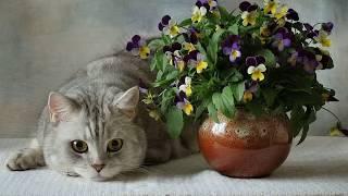 Как отучить кошку гадить в цветы?