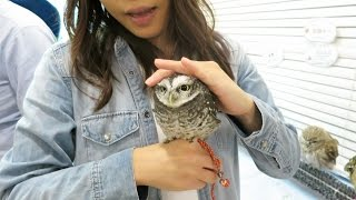 The Cutest Owl Ever, at Japan's Owl Cafe