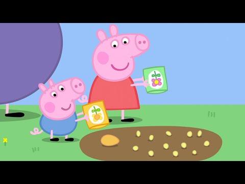 Peppa pig italiano 💚 episodio completo 5x13 💚 cartoni animati