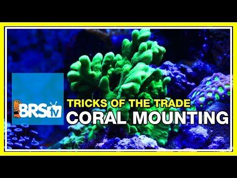 Week 38: Mounting corals: epoxy, super glue, and lighting tweaks | 52 Weeks of Reefing