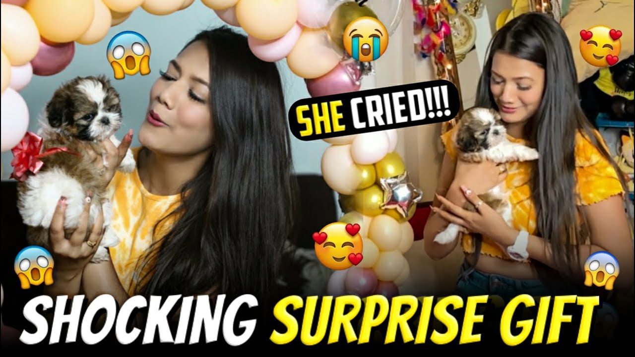 Shocking Surprise Gift 😍😳| Puppy Surprise Compilation | Shih Tzu 🐶| Saloni Mittal