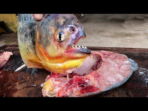 Piranha Catch N Cook
