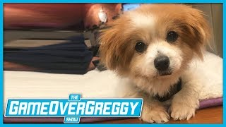 The Cutest Dog That Ever Existed - The GameOverGreggy Show Ep. 244